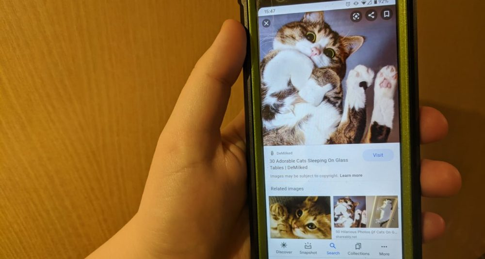 A man looks at adorable cat pictures on his phone.